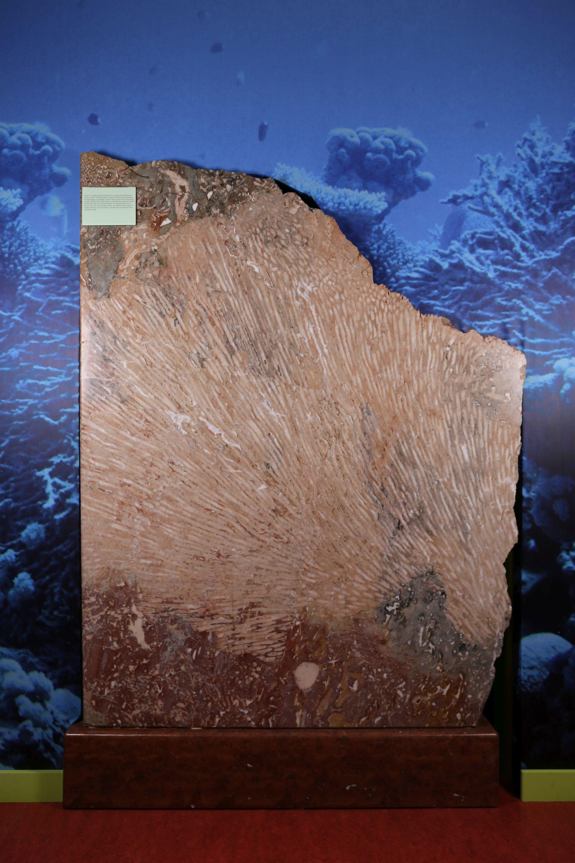 Korallenstock von